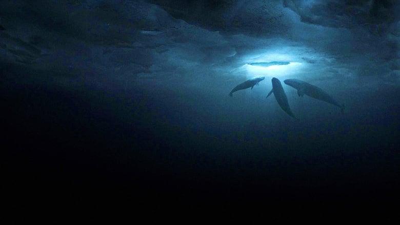 Чудо сред ледовете (2012) - Гледай онлайн